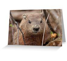 Woodhog or Groundchuck? Greeting Card