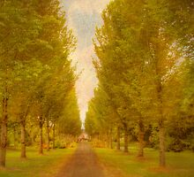 Avenue of Trees - Adare, Ireland by Mark Richards