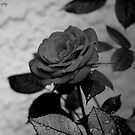 The Rose by Moon Black