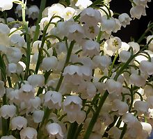 Lily of the Valley ...  by OlaG