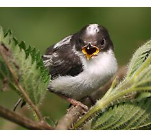 Sing for your supper... Photographic Print