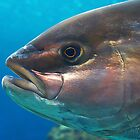 amber-jack fish by Andrey Kudinov
