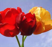 Tulips by MONIGABI