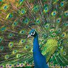 Peafowl by Henri Ton