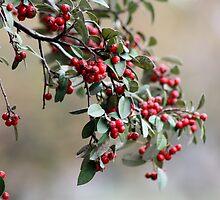 Berries, Coburg Lake by Bevlea Ross