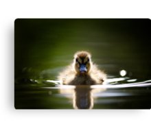 The Inquisitive Duckling Canvas Print