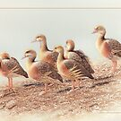 Plumed Whistling Ducks card by Laura Grogan
