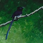 Paradise Flycatcher by FatEyes