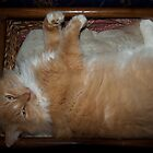 Elvis, My Beautiful Maine Coon Basket Hanging by Karen Kaleta