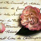 Petali Di Rosa by Kathy Bucari