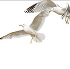Gulls in Flight No 2 by Randall Nyhof