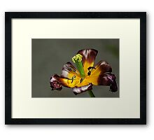 Last moments of glory... Framed Print