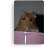 Forest the Hamster Canvas Print