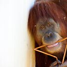 Orang Utan by Tony Walton