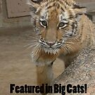 Zoya for Big Cats by starbucksgirl26