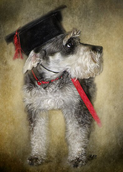 I Have a Degree in  What? by Kay Kempton Raade