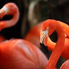 flamingo by FLLETCHER
