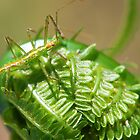 Green Insect on Fiddlehead by Jenny Webber
