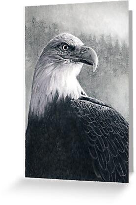 American Bald Eagle by Susana Weber