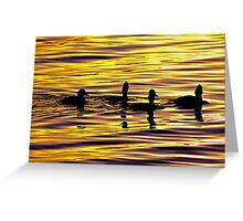 golden sunset lit water with ducks Greeting Card