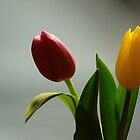 Two tulips by Sally Kate Yeoman