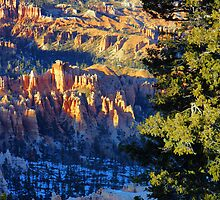 Bryce Canyon Vista by Harry Oldmeadow