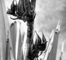 Seed Pods by Victoria limerick