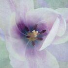 Inside Tulip by Lena Weiss