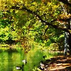 Geese Swimming on Serene Pond by Susan Savad