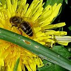Busy Bee by Vanessa Serroul