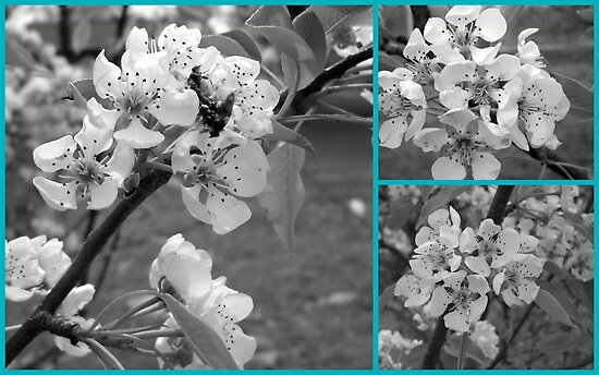 Black and White Tree Blossoms by Debbie Meyers