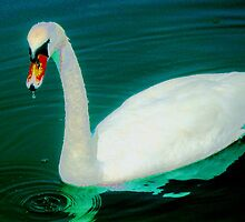Swan on an aqua lake by ♥⊱ B. Randi Bailey