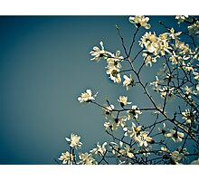 Spring Skies Photographic Print