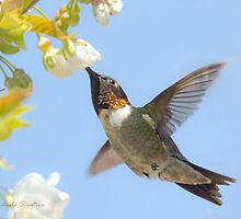 Ruby-throated Hummingbird in flight by Michaela Sagatova