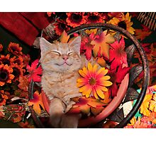 Good Morning Smile ~ Cute Kitty Cat Kitten in Fall Colors taking a Nap Photographic Print