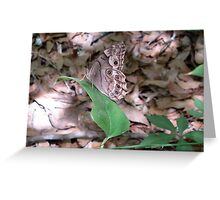 Southern Pearly Eye Greeting Card