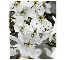 Blossom Textured Poster