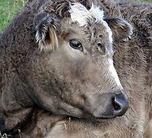 Bashful Bull by GillBell