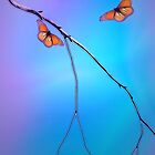 Morning Butterflies by CarolM