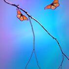 Morning Butterflies by CarolM