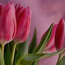 Pretty in Pink by Kimberly Kay Spies