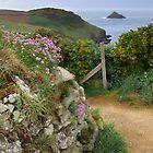 Corn Head and Mouls Island by M G  Pettett