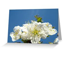 Cherry Blossoms art prints Blue Sky Baslee Troutman Greeting Card