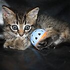 little kitten playing by Tammy Kuiler