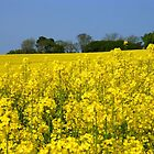 Yellow Rape Field.. by eithnemythen