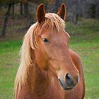 Brown Horse by Daniel  Parent