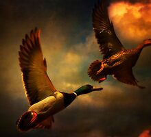 Flying Ducks by ajgosling