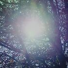 Sun Burst in Tree by Karen L Ramsey