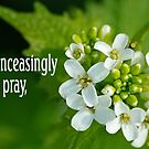 Unceasingly Pray ~ 1 Thessalonians 5:17 (2 of 3) by Robin Clifton