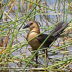 Bird in the Reeds by Megan Evorik